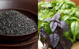 Польза семян базилика для здоровья